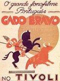 Gado Bravo