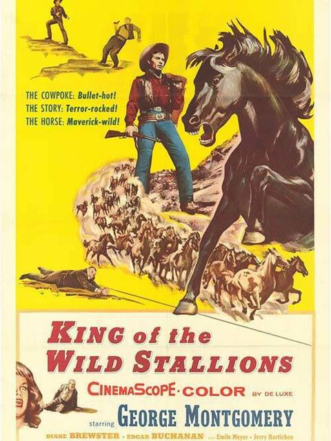 King of the Wild Stallions