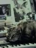 Chat écoutant la musique