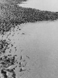 Ostende, reine des plages