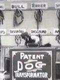 Dog Factory