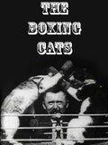 Les chats boxeurs