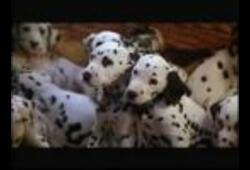 bande annonce de Les 101 Dalmatiens