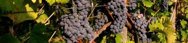 Films sur le Vin et la Vigne