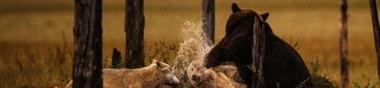 top 5 des films de loup