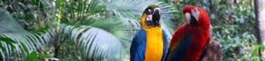 Amazonia (participatif)