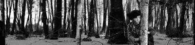 Histoire de l'arbre [Chrono]