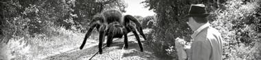 Araignée(s) géante(s)