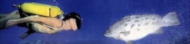 Ichthyofilms (poissons) [Chrono]
