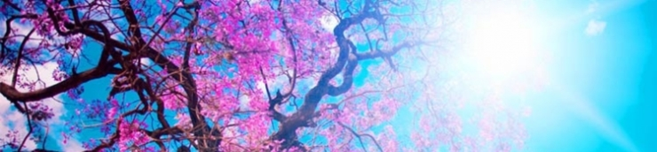 Un w-e 二 petit Cycle Japon 日本国 ! Episode 10 (09-10 mars 2019)