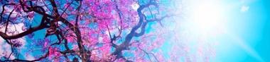 """Un """"pont"""" : petit Cycle Japon 日本国 ! Episode 3 (08-10 juin 2019)"""