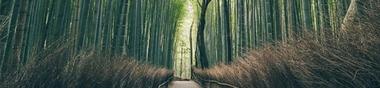 日本 Volume 2. Exploration erratique, compulsive et monomaniaque du cinéma japonais ...